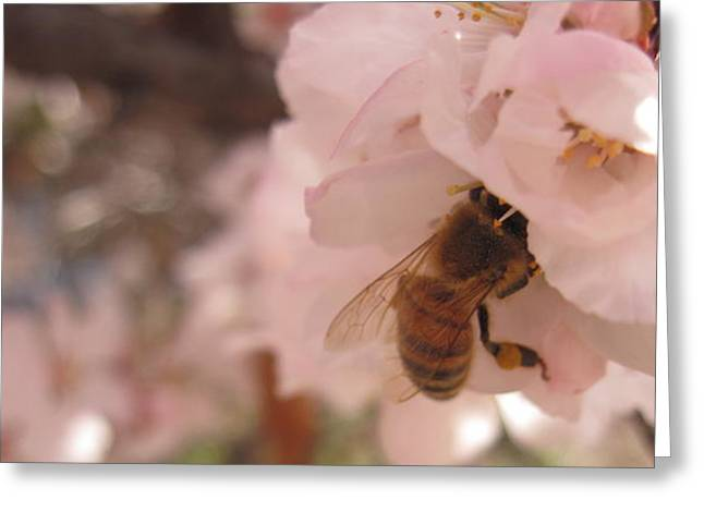 Crab Apple Bee Greeting Card by Luke Cain