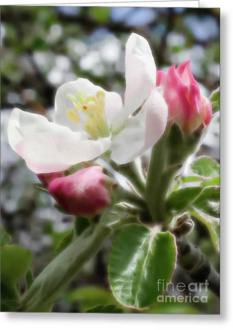 Crab Apple Blossom 1 Greeting Card