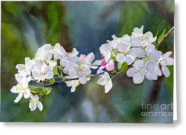 Crab Apple Blossoms With Background Greeting Card