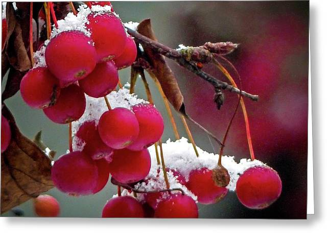 Crab Apples Snow Greeting Card