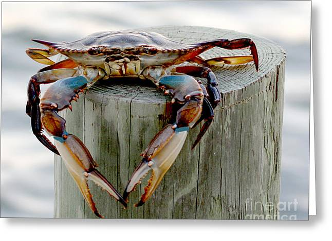 Pier Prints Greeting Cards - Crab Hanging Out Greeting Card by Luana K Perez