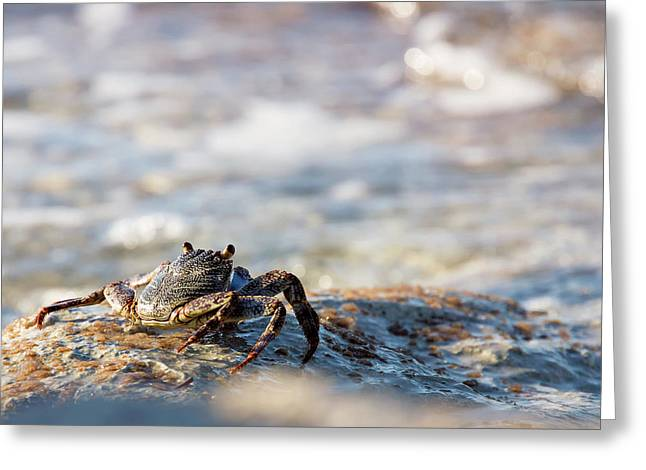 Crab Looking For Food Greeting Card
