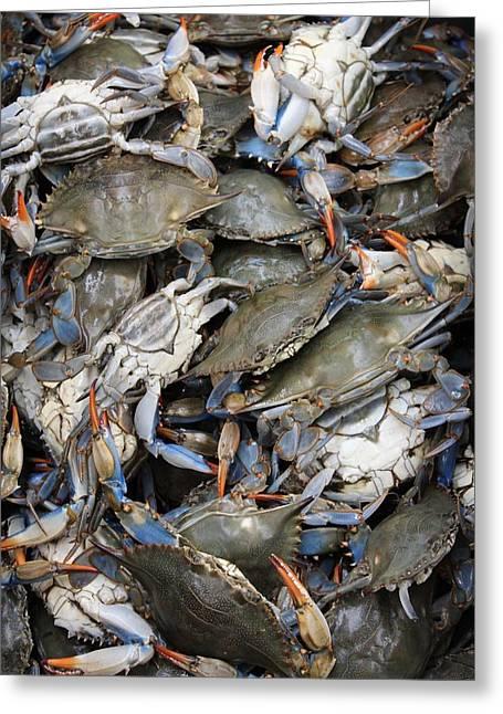 Crab Pile Greeting Card by Judy Bernier