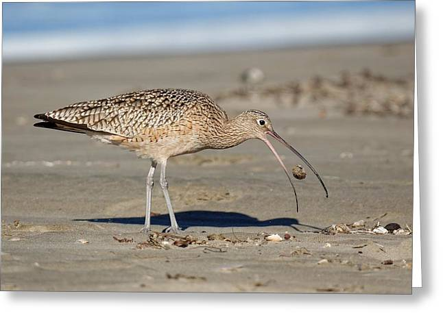 Crab Toss - Curlew Greeting Card