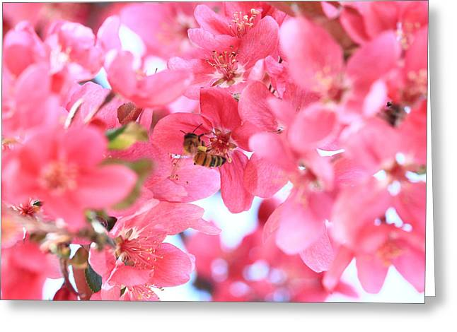 Crabapple Bees 2 Greeting Card