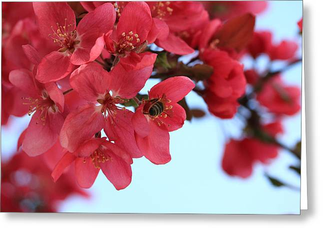 Crabapple Bees Greeting Card