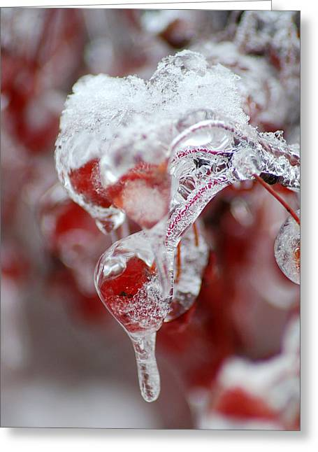 Crabapple Berry In Ice Greeting Card by Steven Geer