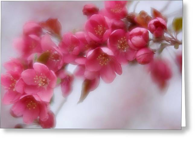 Greeting Card featuring the photograph Crabapple Blossom - Dark Pink by Diane Alexander