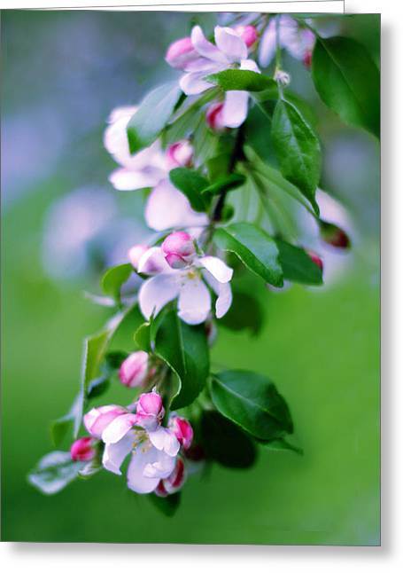 Crabapple Blossom Greeting Card by Jessica Jenney