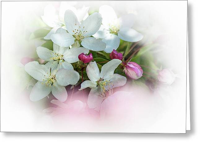 Crabapple Blossoms 3 - Greeting Card