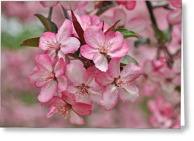 Crabapple Blossoms Greeting Card by Gerald Hiam