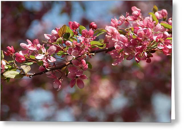 Crabapple In Spring Section 2 Of 4 Greeting Card