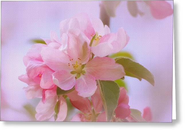 Crabapple Pink Greeting Card