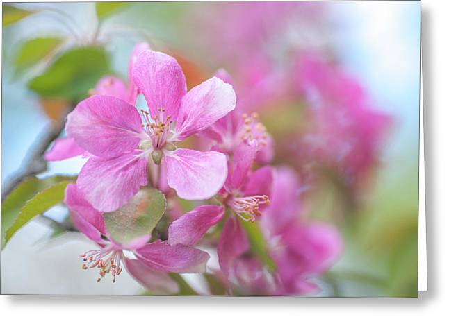 Crabapple Tree Bloom Greeting Card by Jenny Rainbow