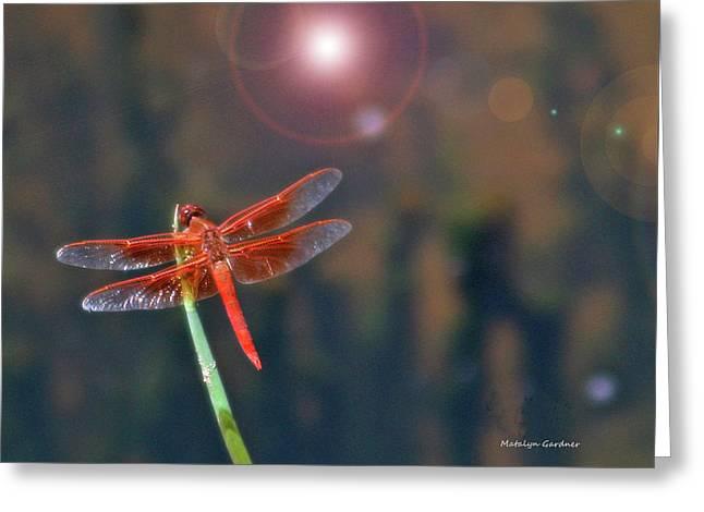 Crackerjack Dragonfly Greeting Card