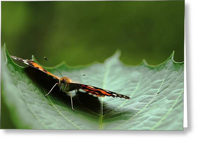 Greeting Card featuring the photograph Cradled Painted Lady by Debbie Oppermann