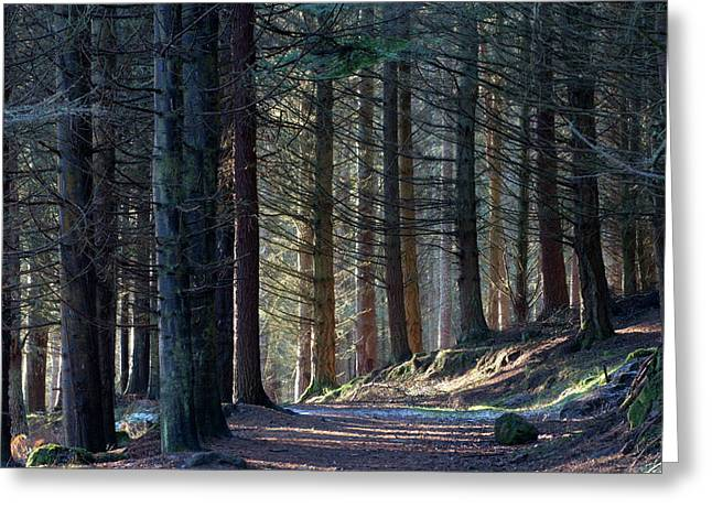 Craig Dunain - Forest In Winter Light Greeting Card