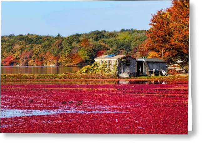 Cranberry Juice Greeting Card by Gina Cormier