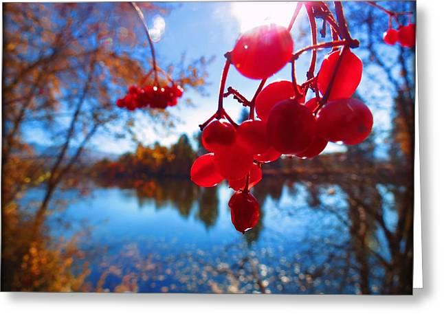 Cranberrybush Greeting Card