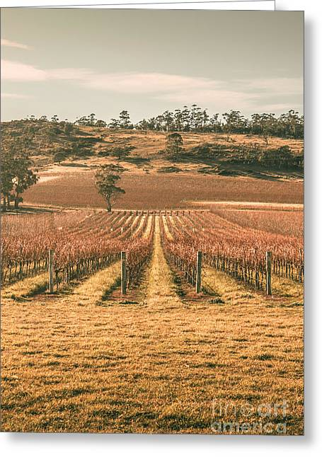 Cranbrook Vineyard Greeting Card by Jorgo Photography - Wall Art Gallery
