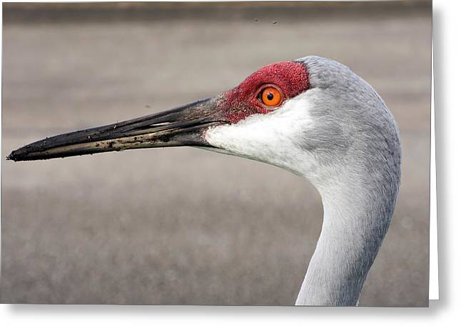 Crane Closeup Greeting Card