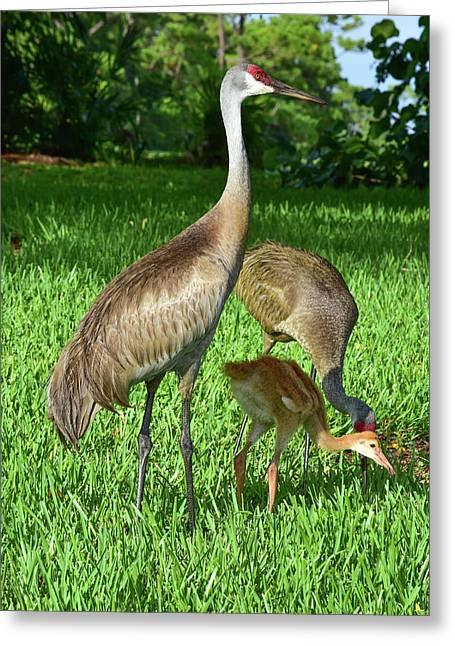 Crane Family Picnic Greeting Card