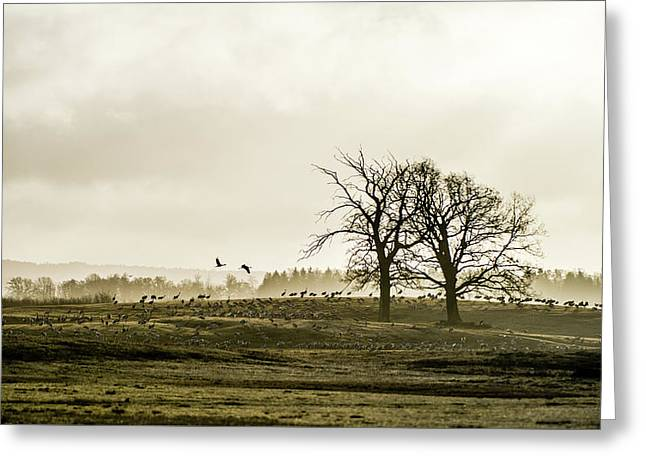 Crane Hill Greeting Card by Torbjorn Swenelius
