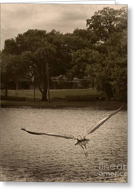 Crane In Flight Greeting Card
