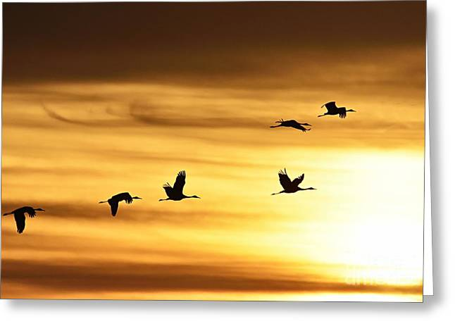 Greeting Card featuring the photograph Cranes At Sunrise 2 by Larry Ricker