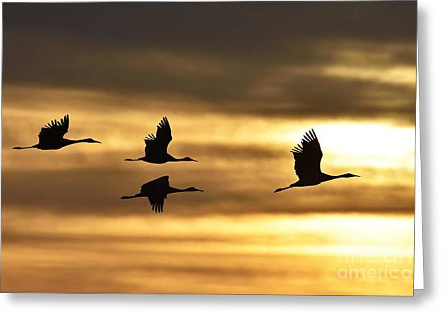 Cranes At Sunrise Greeting Card by Larry Ricker