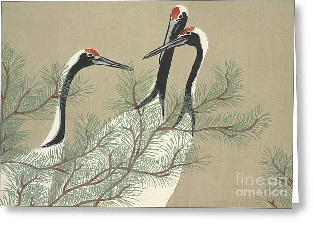 Red crowned crane greeting cards fine art america cranes greeting card m4hsunfo