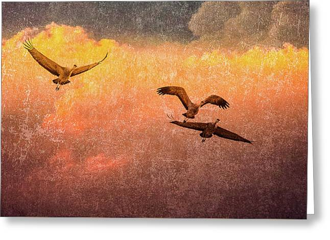Greeting Card featuring the photograph Cranes Lifting Into The Sky by Jeffrey Jensen