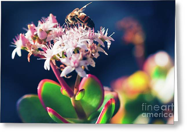 Greeting Card featuring the photograph Crassula Ovata Flowers And Honey Bee by Sharon Mau