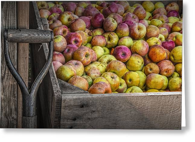 Crated Apples At The Cider Press Greeting Card by Randall Nyhof