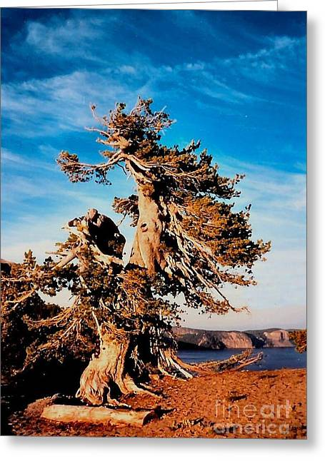Crater Lake Winds Greeting Card by Diane E Berry