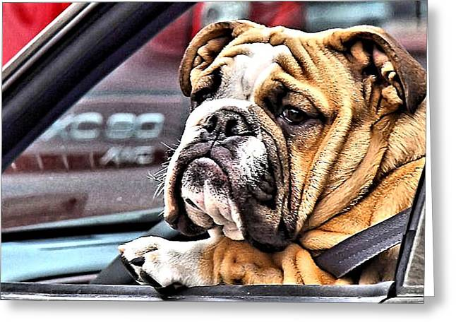 Georgia Bulldog Greeting Cards - Crazy Atlanta Drivers Greeting Card by Kenneth Mucke