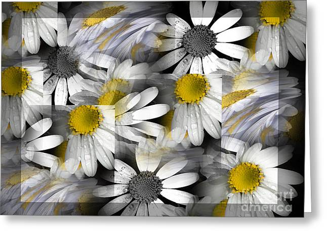 Crazy Daisys Greeting Card by Karen Lewis