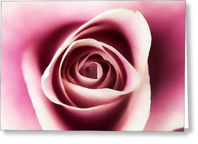 Creamy Pink Greeting Card
