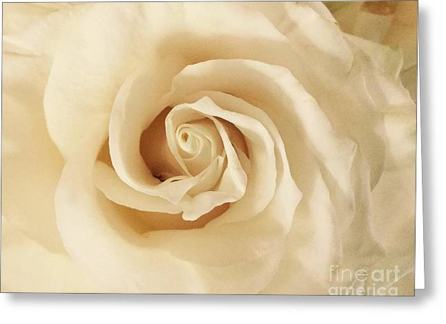 Greeting Card featuring the photograph Creamy Rose by Mary K Conaboy