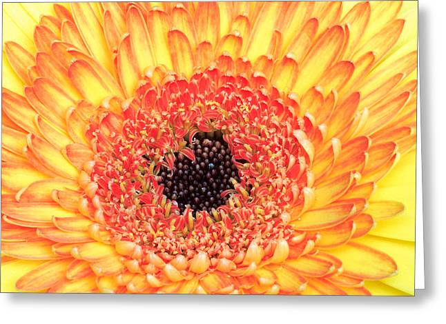 Creation Of A Masterpiece Greeting Card by Pierre Leclerc Photography