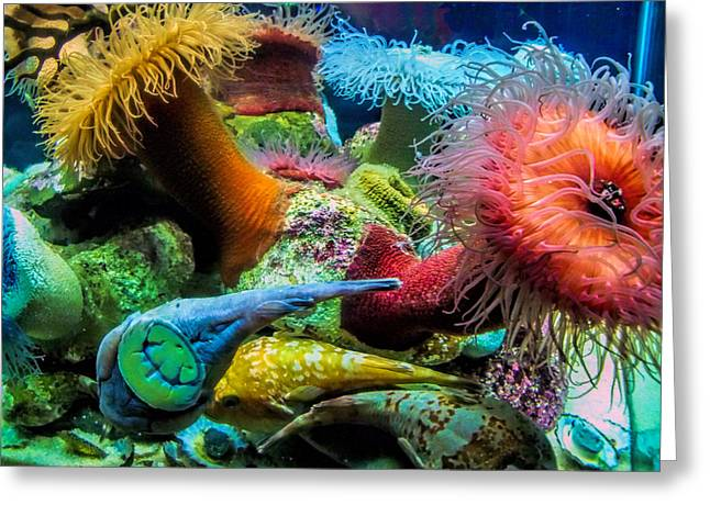 Creatures Of The Aquarium Greeting Card by Lynn Bolt