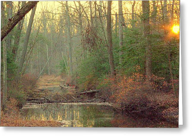 Creek Bed Greeting Card