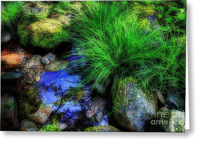 Creek Bed Greeting Card by Michael Eingle