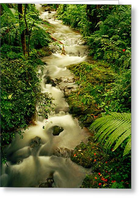 Creek Flowing Through A Rainforest Greeting Card by Panoramic Images