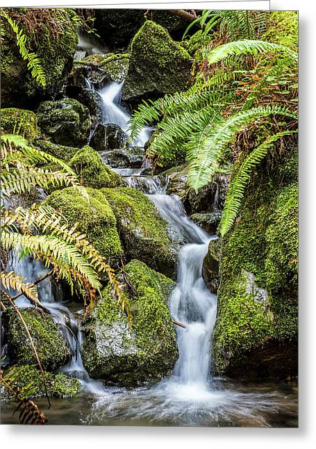 Creek In The Forest Greeting Card by Paul Freidlund