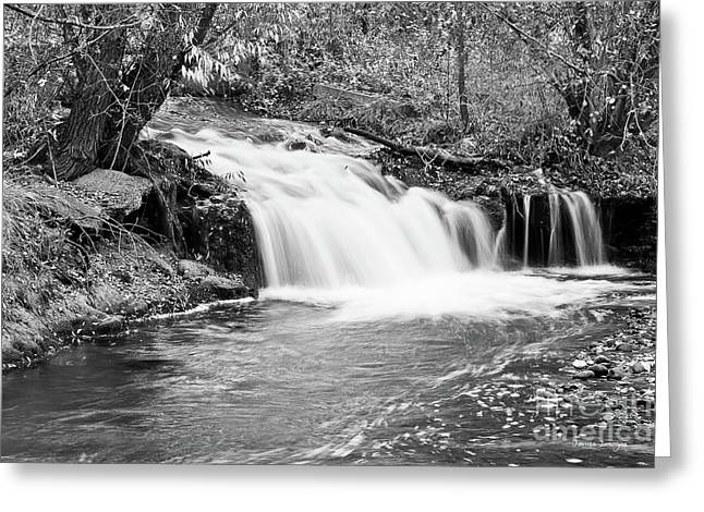 Creek Merge Waterfall In Black And White Greeting Card