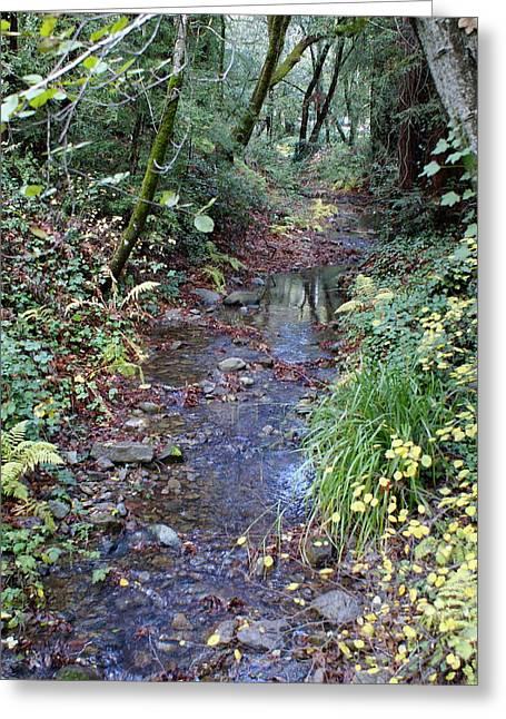 Creek On Mt Tamalpais 2 Greeting Card