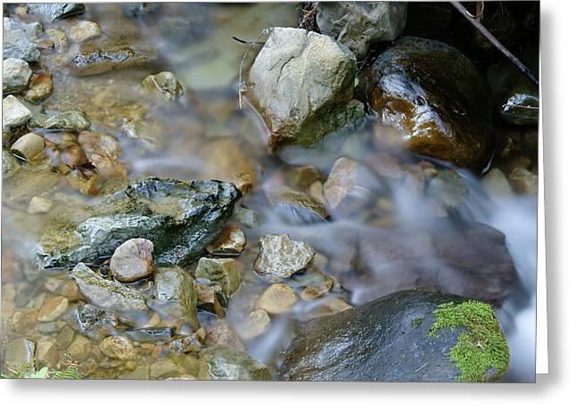Creek On Mt Tamalpais Greeting Card