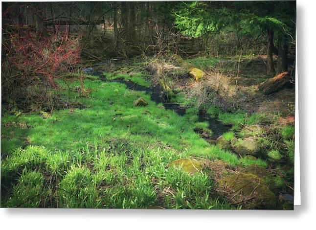 Creek - Spring At Retzer Nature Center Greeting Card by Jennifer Rondinelli Reilly - Fine Art Photography