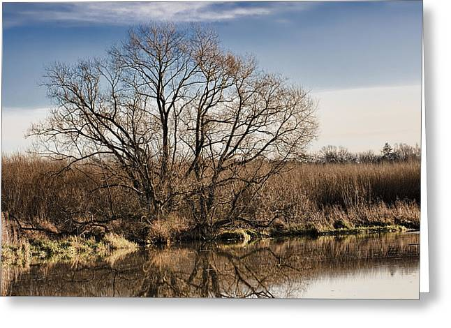 Creek Tree Greeting Card
